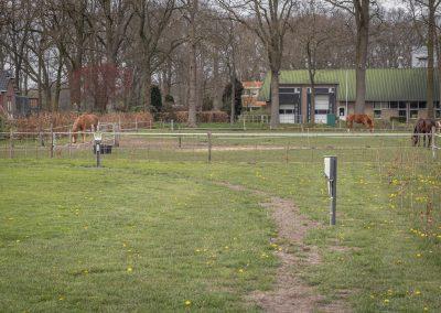 uitzicht-paarden