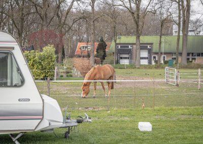 uitzicht-paard